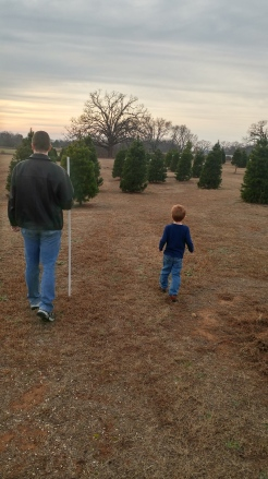 Looking for a Christmas tree!